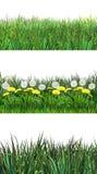 Summer fresh grass set, clip art. Green Fresh Grass on white background, Spring grass set, four different green grass dandelion stripes, environment day clip art stock illustration