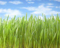 Summer Grass Sky Background stock photography