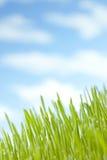 Summer Grass Sky Background stock photos