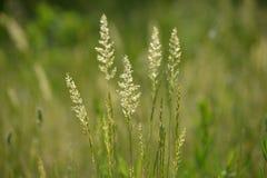 Summer grass stock photography