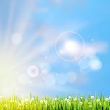 Summer grass in sun light. EPS 10 Royalty Free Stock Photos