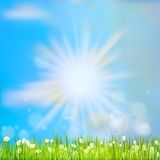 Summer grass in sun light. EPS 10 Stock Photography