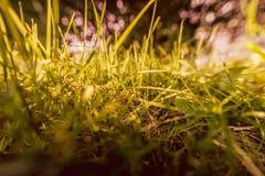 Summer, grass, sunlight, bokeh, abstract image stock photography