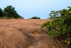 Summer grass, sunny day. Summer field, road, footpath. summer grass, sunny day royalty free stock photography