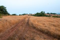 Summer grass, sunny day. Summer field, road, footpath. summer grass, sunny day royalty free stock photo