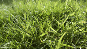 Summer grasses in bright sunshine. Close up view of grass on a sunny evening with some lens flare and a small depth of field Royalty Free Stock Photography