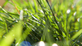 Summer grasses in bright sunshine. Close up view of grass on a sunny evening with some lens flare and a small depth of field Stock Photography