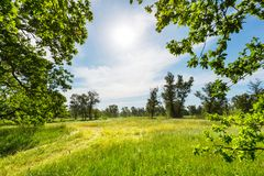 Summer grassland Stock Images
