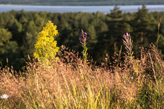 Summer grassland Royalty Free Stock Photography