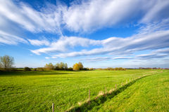 Summer grassland and blue sky Stock Image