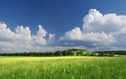 Summer grassland / Green summer meadow Royalty Free Stock Images