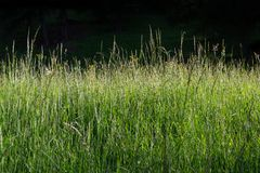 Summer grassland Royalty Free Stock Image