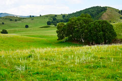The summer grassland Stock Images