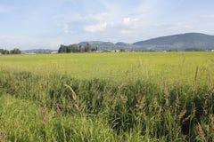 Summer Grassland Royalty Free Stock Photos