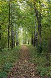 Summer green alley of trees. stock photos