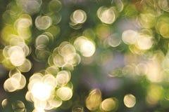 Summer green background blur bokeh Stock Photography