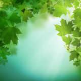 Summer green background with greenery foliage Royalty Free Stock Image