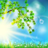 Summer green background with selective focus. Royalty Free Stock Image