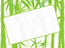 Summer green bamboo border Royalty Free Stock Image