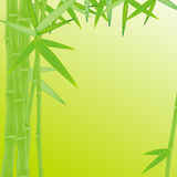 Summer green bamboo frame Stock Image