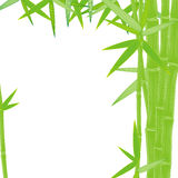 Summer green bamboo frame Stock Images