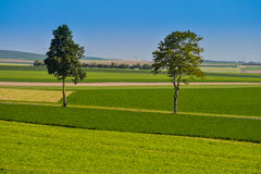 Summer green corn fields and trees in France Europe Stock Photos
