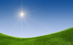 Summer green field. Summer or spring - green field background stock photo