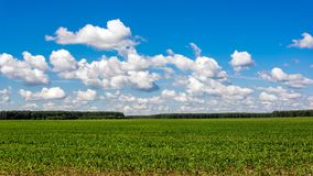 Free Summer Green Field And Clouds Stock Images - 103442624