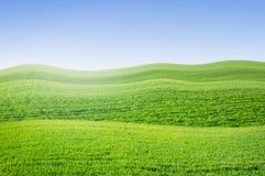Summer green field landscape Stock Photography