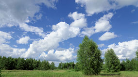 Summer green field under the blue sky with beautiful clouds on the forest background Royalty Free Stock Photography