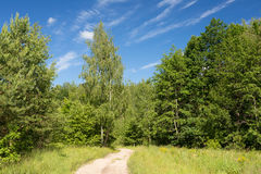 Summer Green Forest. Countryside Road, Path, Way, Lane, Pathway Stock Photos