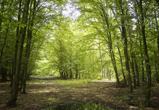 Summer in a green forest Royalty Free Stock Photos