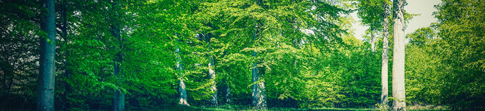 Summer in a green forest Stock Image