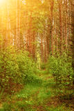 Summer green forest Royalty Free Stock Photography