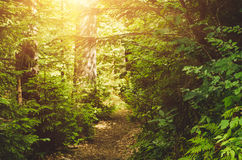 Summer green forest Stock Images
