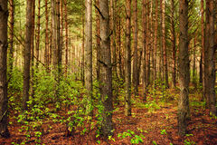 Summer green forest Royalty Free Stock Images