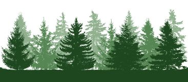 Summer green forest, silhouette of spruces. Vector illustration royalty free illustration
