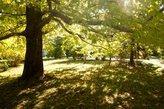 Summer green forest with sun rays Royalty Free Stock Photography