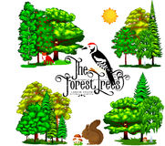 Summer Green Forest Tree  on white background. Cartoon vector set trees in outdoor park. Stock Images