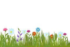 Summer green grass and flowers. Garden plants and field herbs vector background. Illustration of grass and colored flower on lawn Stock Images