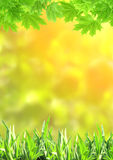 Summer green grass and maple leaves Stock Image