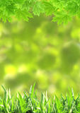 Summer green grass and maple leaves Stock Photos