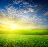 Summer green grass (shallow DOF) Royalty Free Stock Image