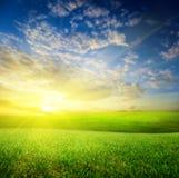 Summer green grass (shallow DOF) Royalty Free Stock Image