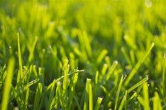 Summer - Green Grass and Sunlight. The summer sun shines through the fresh green grass Stock Image