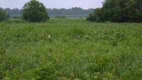 Summer green grassy natural wild meadow Stock Photos