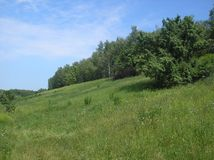 Summer green hilly glade stock image