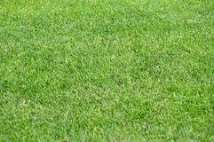 Summer green lawn for background. Royalty Free Stock Photo