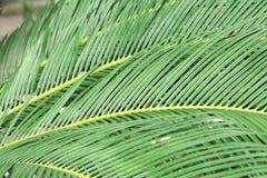 Summer green leaf Stock Photos