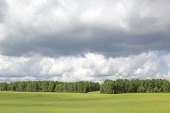 Summer green meadow. And wood on horizon Royalty Free Stock Image